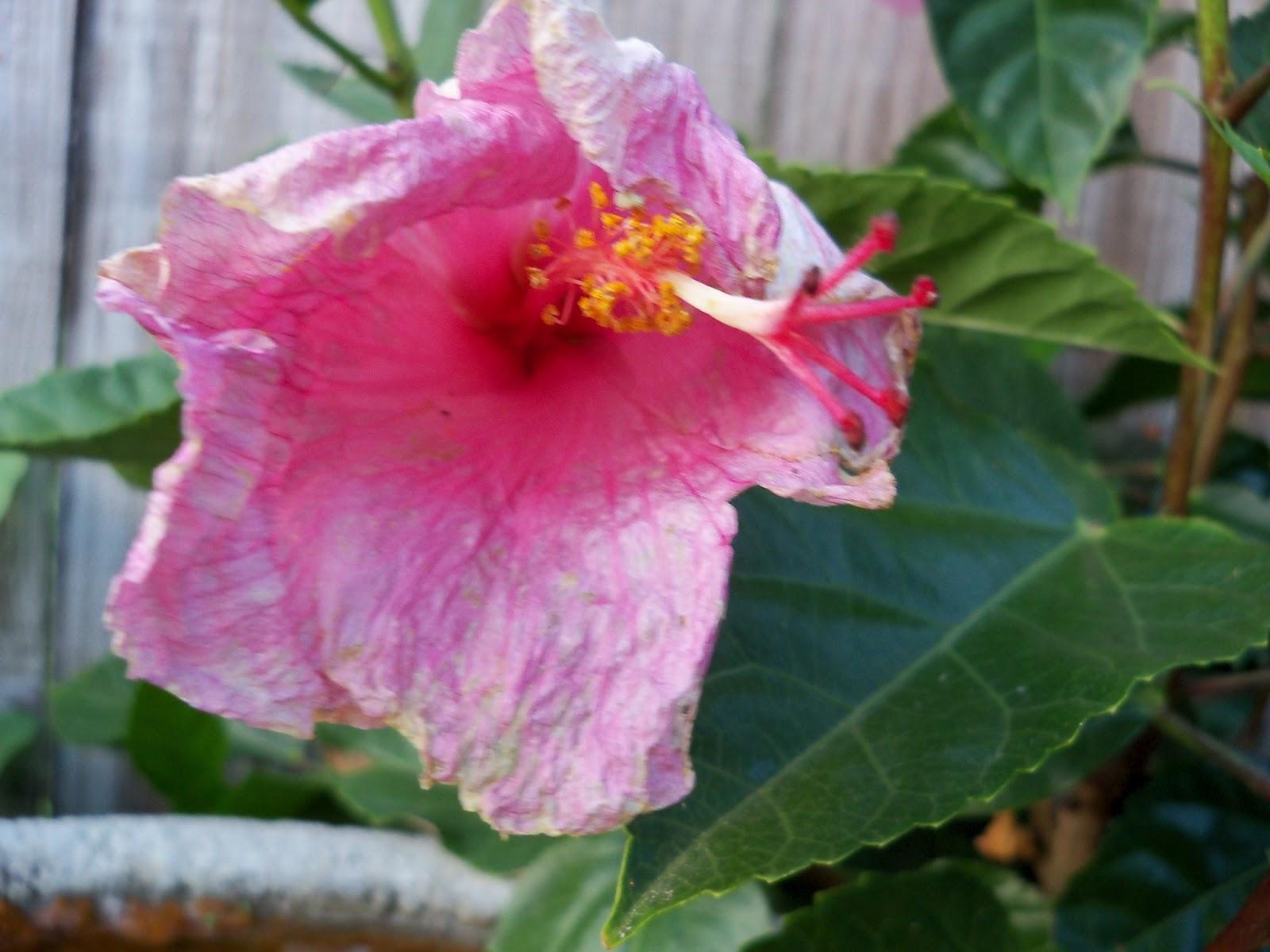 Gardening 2012 - 115_2035.JPG