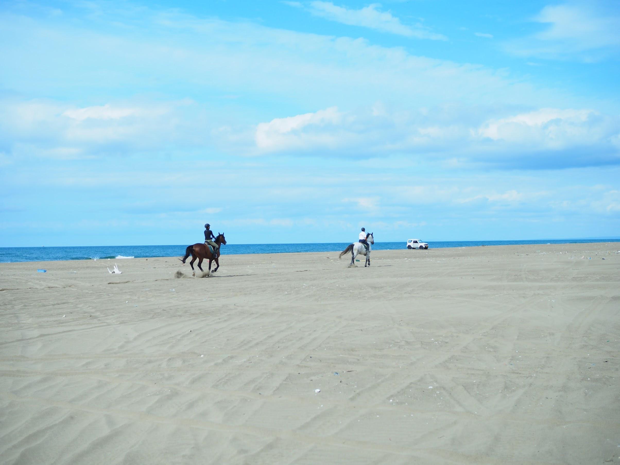 砂浜を走る馬