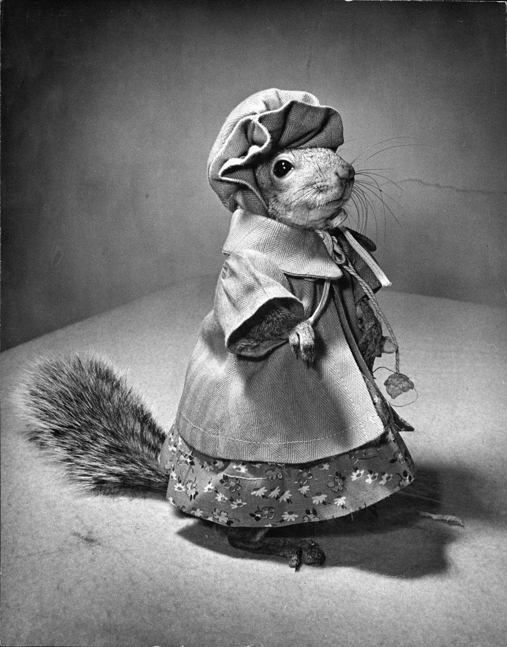 tommy-tucker-squirrel-5