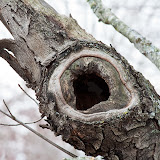 Hollow-in-tree_MG_2042-copy.jpg