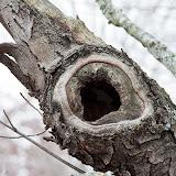 Hollow-in-tree_MG_2042-copy.jpg
