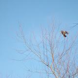 2011 December - SANY1263.jpg