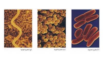 تصنيف البكتيريا ppt
