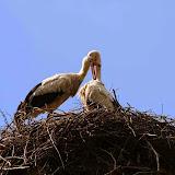 Vogels en dieren - IMG_7295.JPG