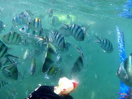 family trip pulau pari 140716 GoPro 24