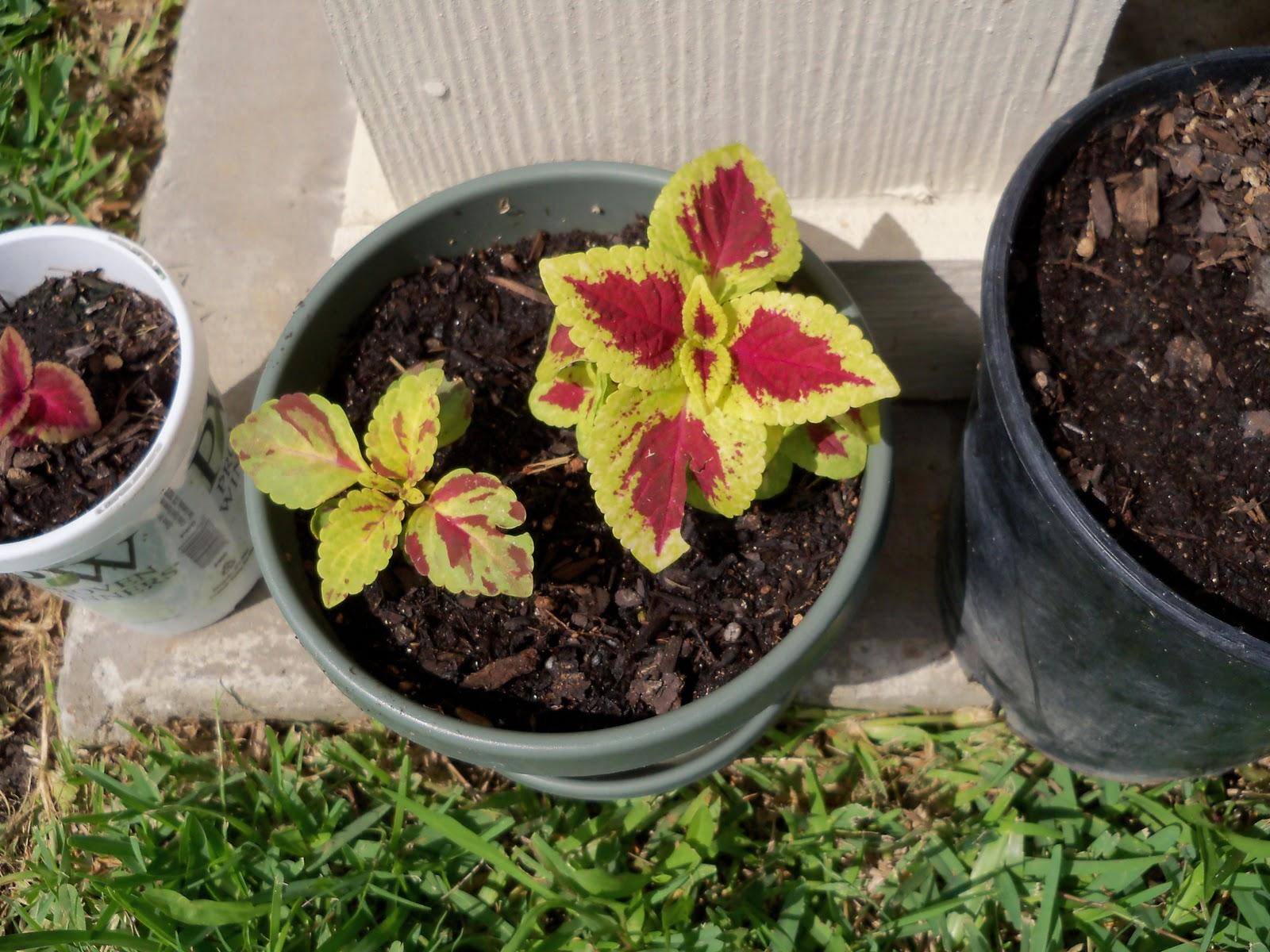 Gardening 2010, Part Two - 101_2771.JPG