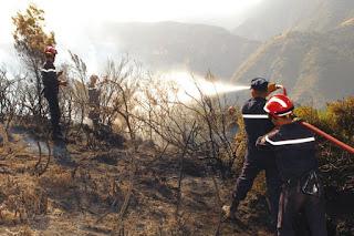 La plupart se sont déclarés dans le nord du pays/ Incendies : 8 000 foyers depuis le début de l'été