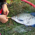 20140624_Fishing_BasivKut_007.jpg