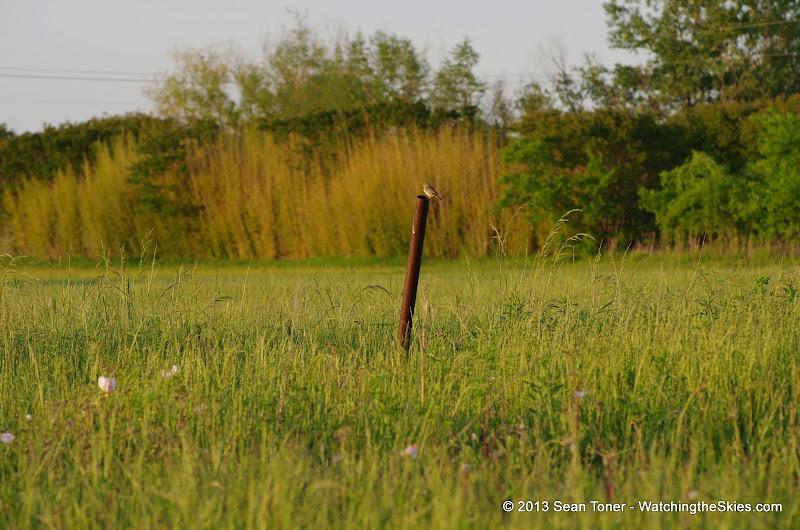 2013 Spring Flora & Fauna - IMGP6328.JPG