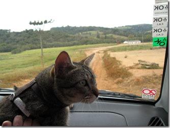 fredy-o-gato-viajante-em-carrancas