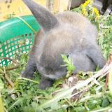Kleintierzüchter Gisingen