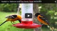 Video Index of Texas Birds