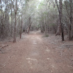 Track south of Hobart Beach camping area (106792)