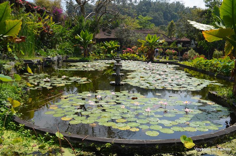 Waterlily pond at Tirtagangga