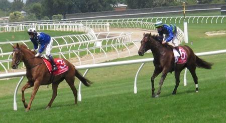 race 1_fast approaching _shacarde