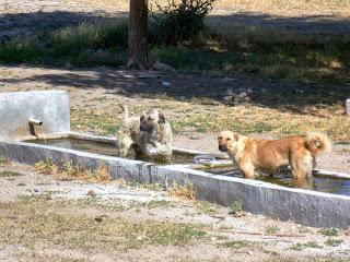 P1050509-Adana-10