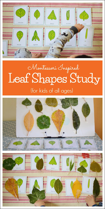 LeafShapes
