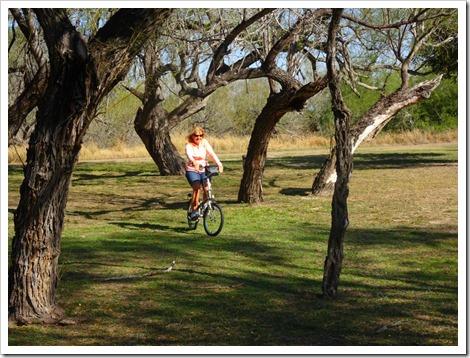 Marsha and trees