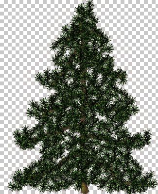 H Tree - Pine.jpg
