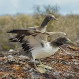 galapagos - Galapagos_FB_2-21.jpg