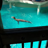 Houston Zoo - 116_8374.JPG