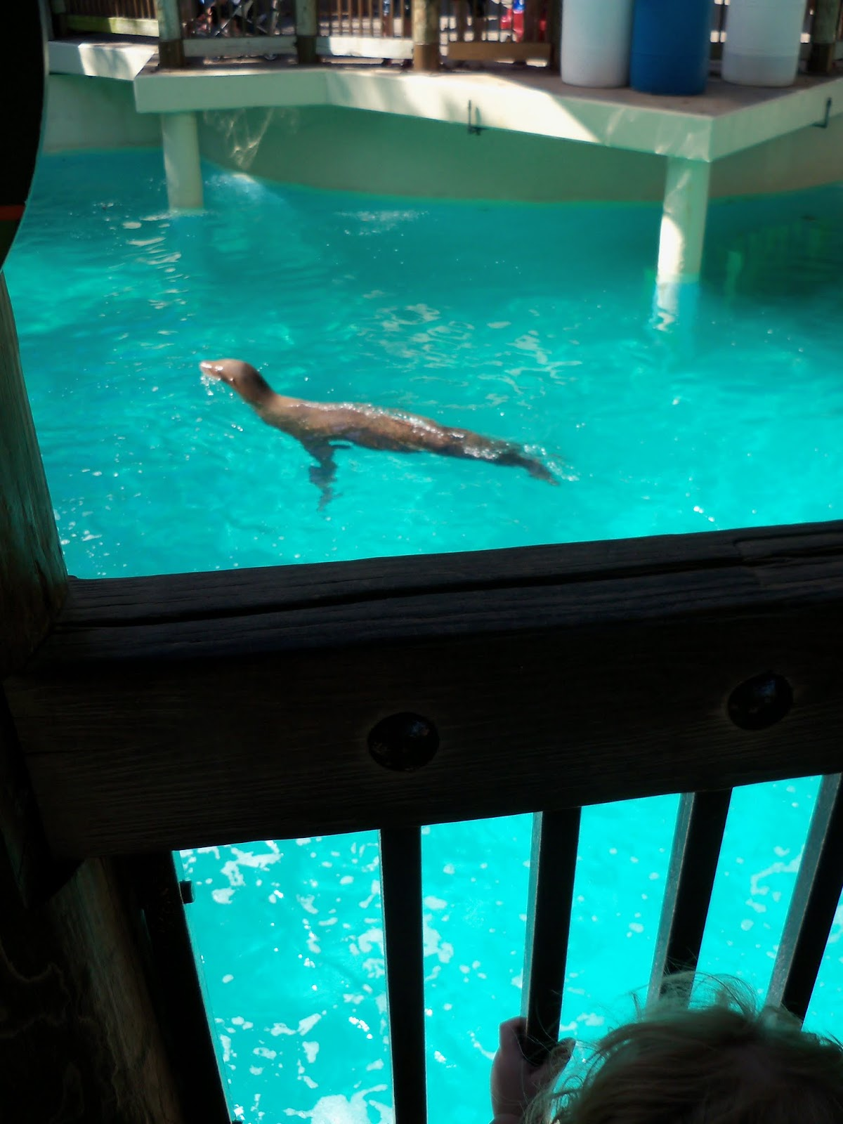 Houston Zoo - 116_8374.JPG