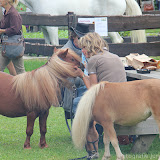Paard & Erfgoed 2 sept. 2012 (68 van 139)