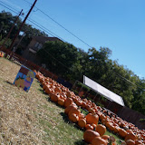 Pumpkin Patch 2015 - 100_0393.JPG