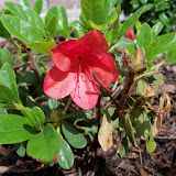 Gardening 2010 - 101_0427.JPG