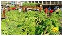 DSC_0002_keralapix.com_banana market