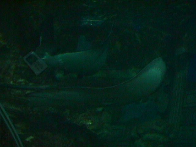 1190Electric Eel