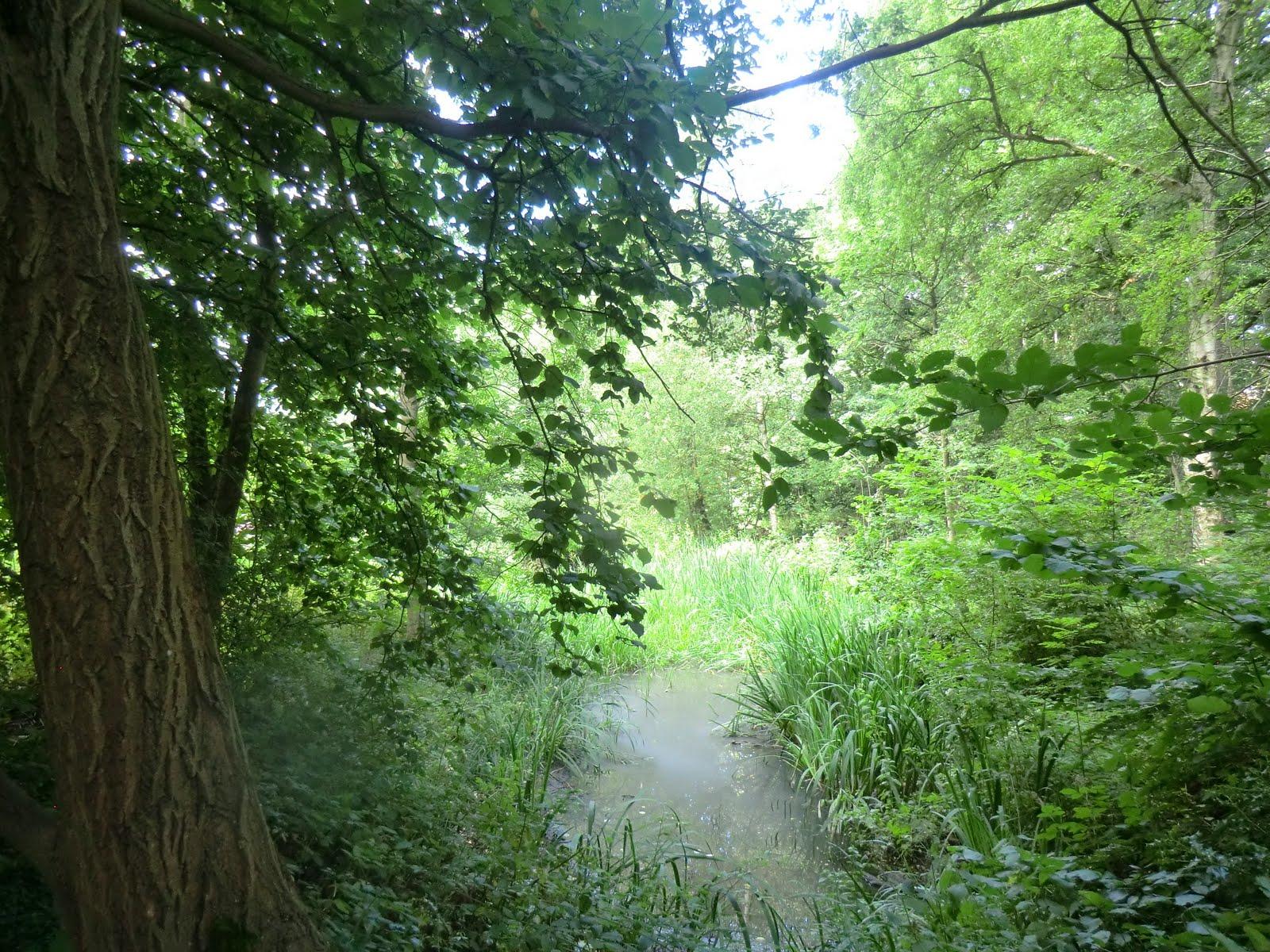 CIMG9268 Pond, Hampstead Heath Extension