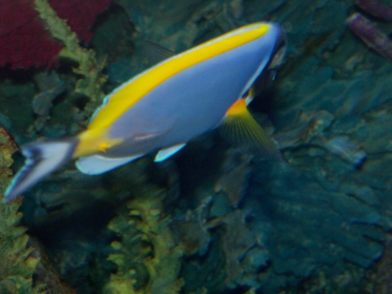 Downtown Aquarium - 116_3928.JPG