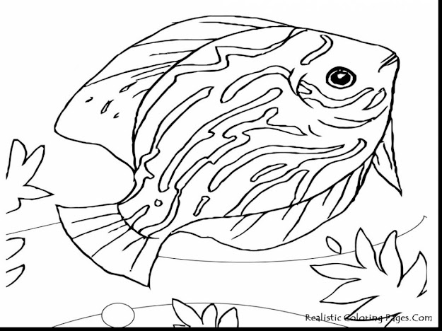 Random Related Image Of Unbelievable Sea Life Animals Coloring Pages With Ocean  Coloring Page