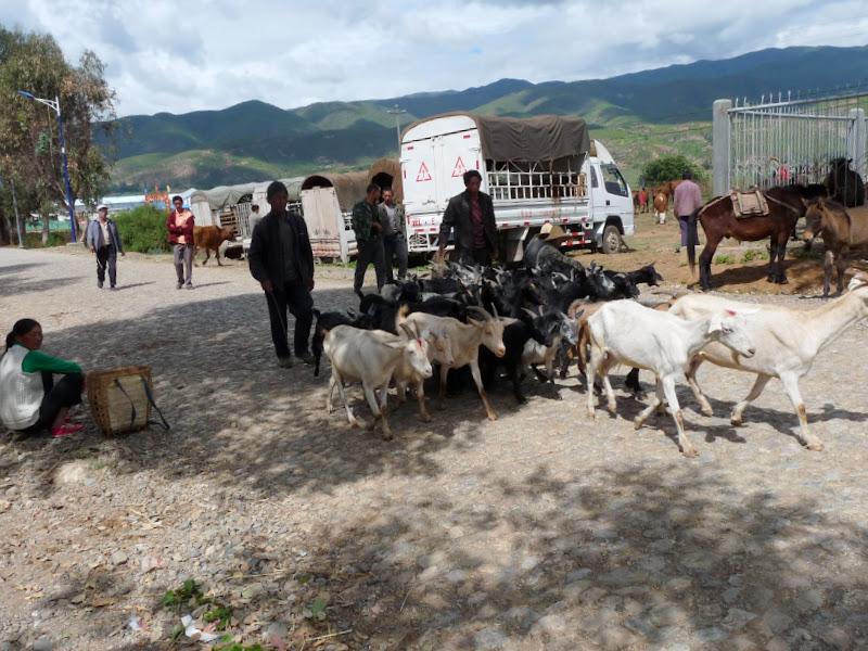 Chine. Yunnan .SHA XI et environs proches 1 - P1240569.JPG