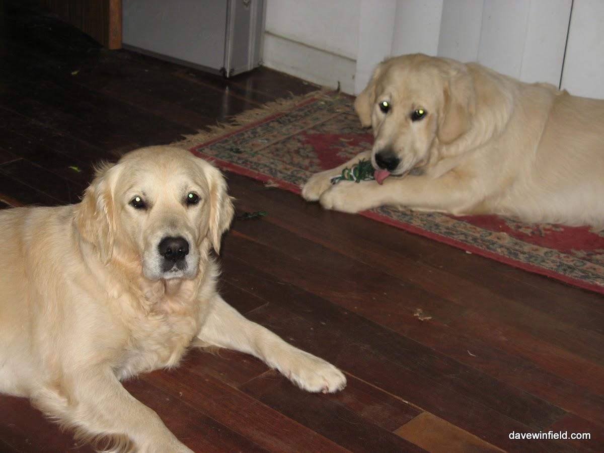 2590Jess and Jake at Home.jpg