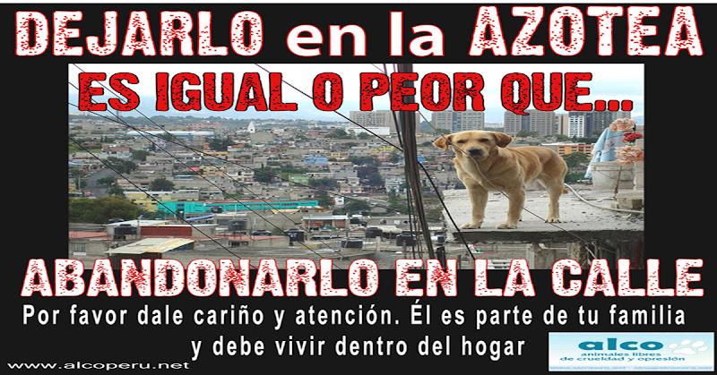 La infeliz vida de un perro en la azotea animales libres for La azotea de la casa de granada