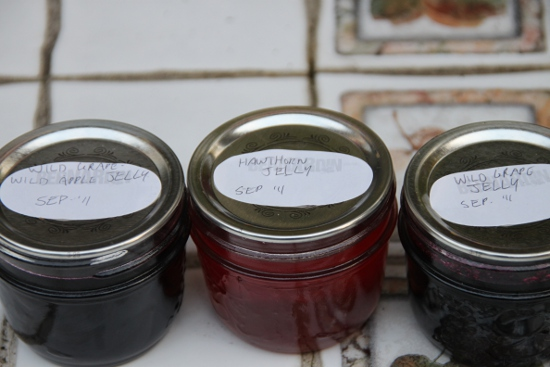Wild Grape-Wild Apple, Hawthorn, and Wild Grape jelly.