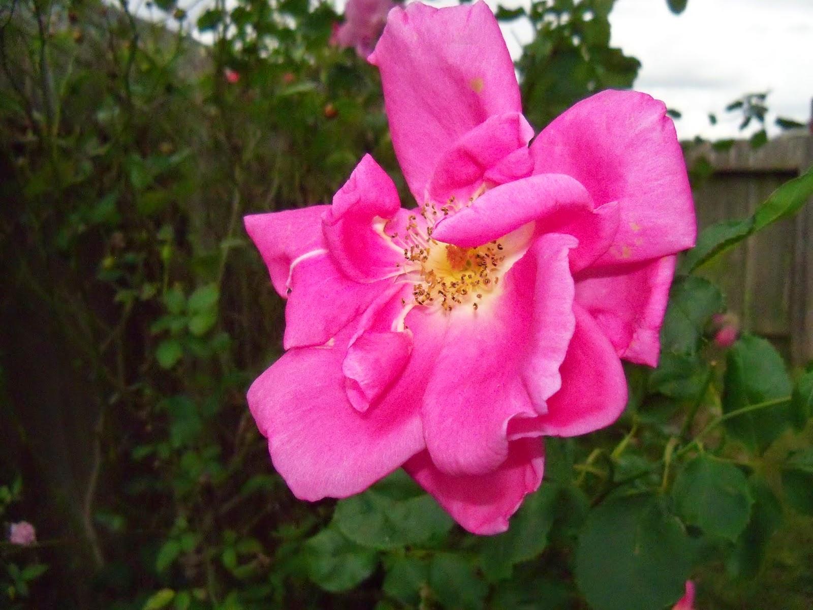 Gardening 2014 - 116_6264.JPG