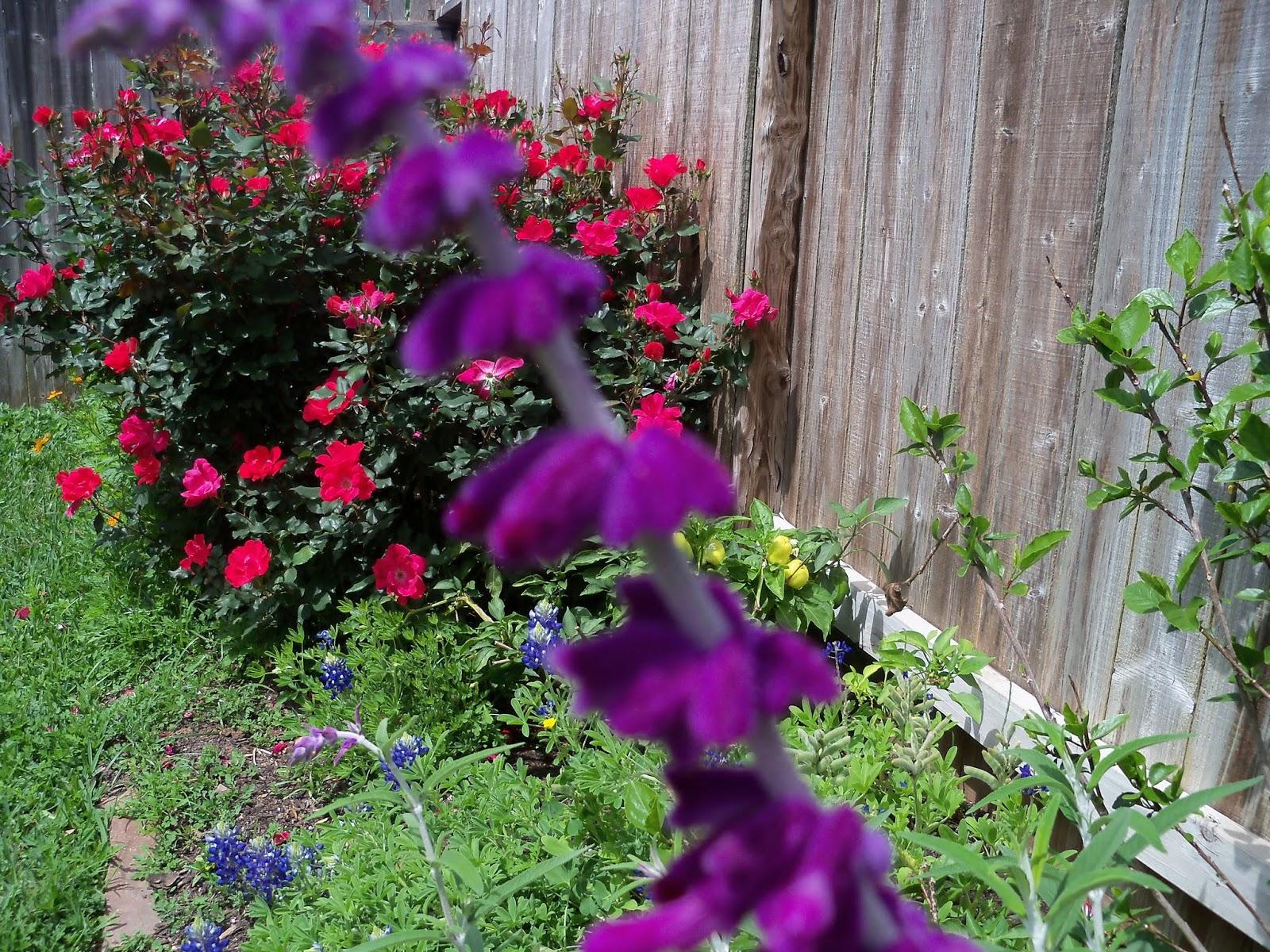 Gardening 2013 - 115_5719.JPG