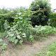 2010年7月15日の家庭菜園の様子
