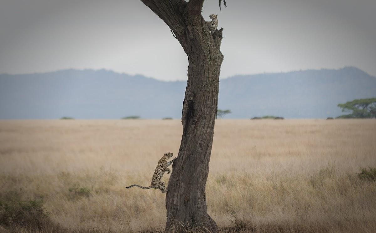 TanzaniaDSC03449.jpg