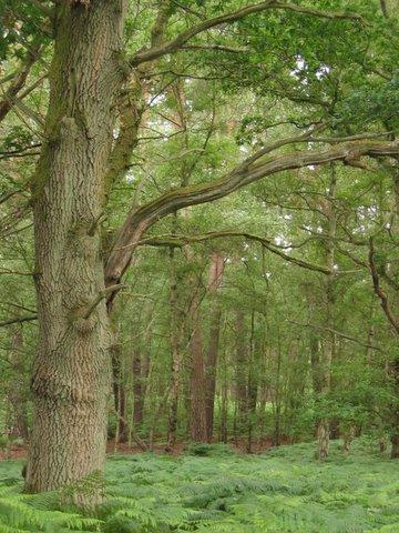 24 wood