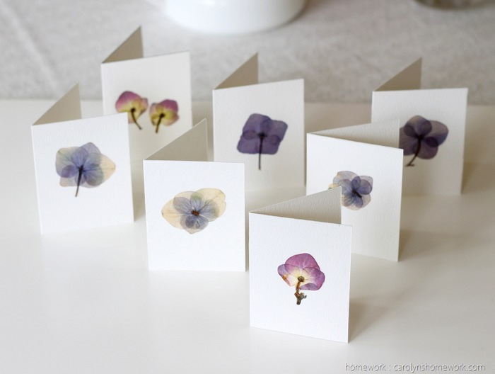 Pressed Hydrangeas via homework (9)