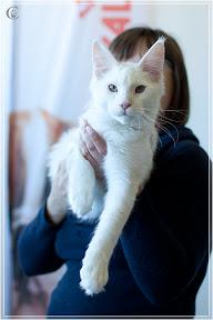 cats-show-25-03-2012-fife-spb-www.coonplanet.ru-015.jpg