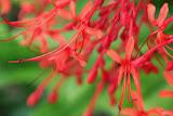 flower (75).jpg
