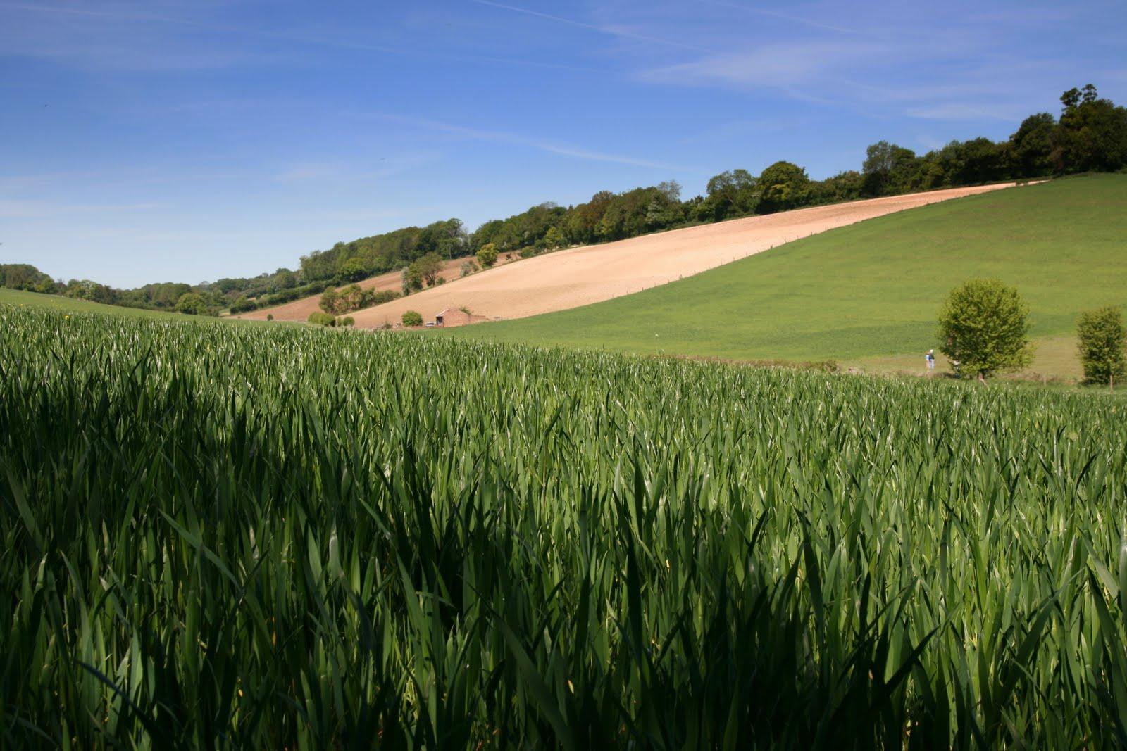 1005 031 Chesham to Great Missenden, England Prime crops