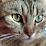 Sae Tsuchiya's profile photo