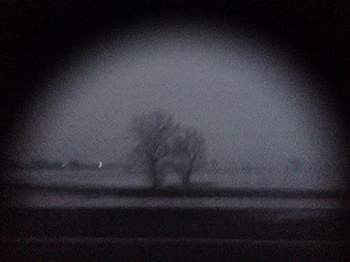 La solitudine degli alberi primi di ginevral