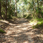 Some wide tracks in Green Point Reserve (403834)